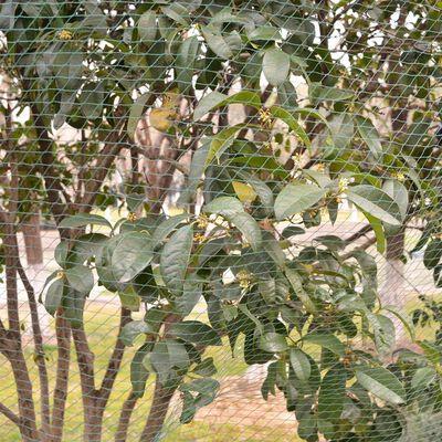 vidaXL Redes anti-pássaros 5 pcs 4x10 m PE
